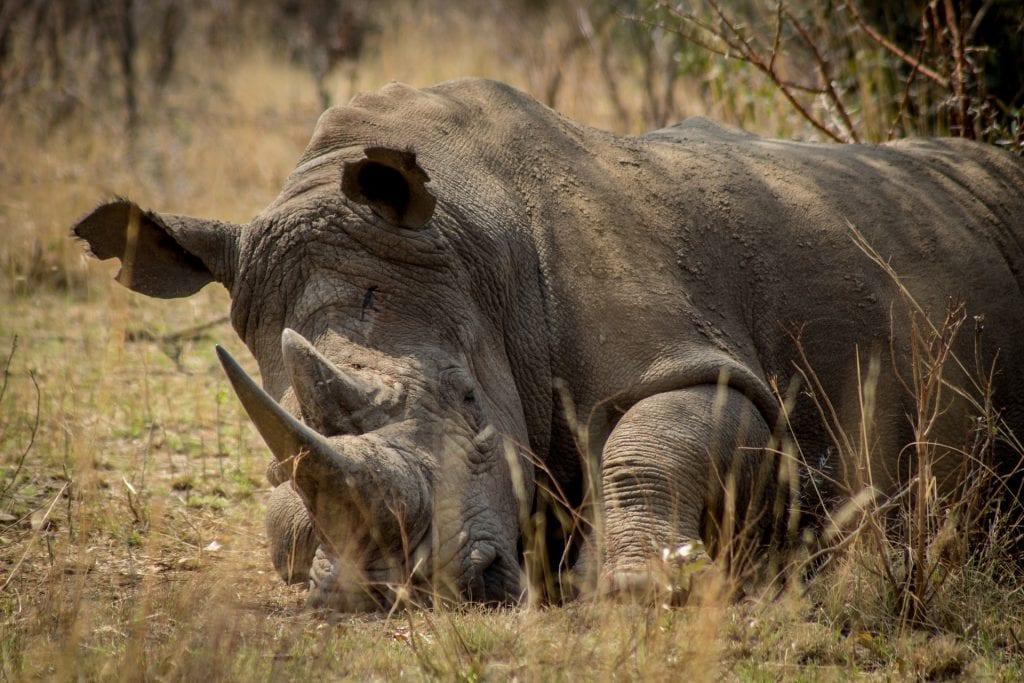 366 poachers arrested in the Kruger National Park Since 2018