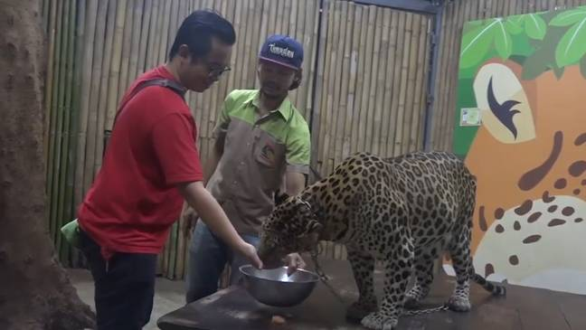 Two-Year-Old Boy Mauled By Leopard In Thailand