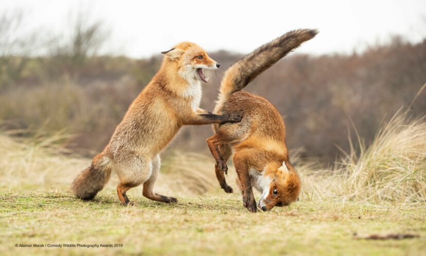 Comedy Wildlife Photography Awards 2019 Finalists!