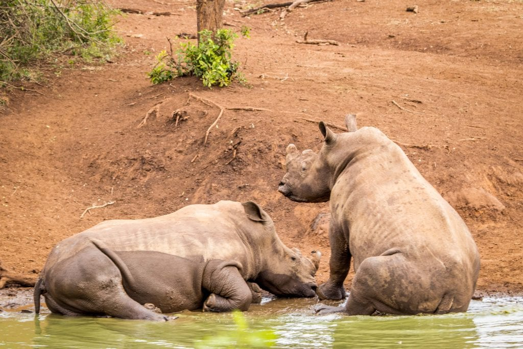 Mozambique Sentences Rhino Poachers For Crimes Committed In South Africa
