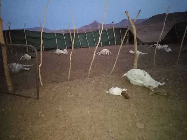 Lions Kill More Than 40 Goats In 3 Days