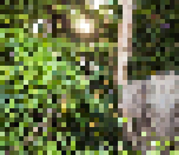 Campaign Creates Photos Of Species With As Many Pixels As There Are Animals Left