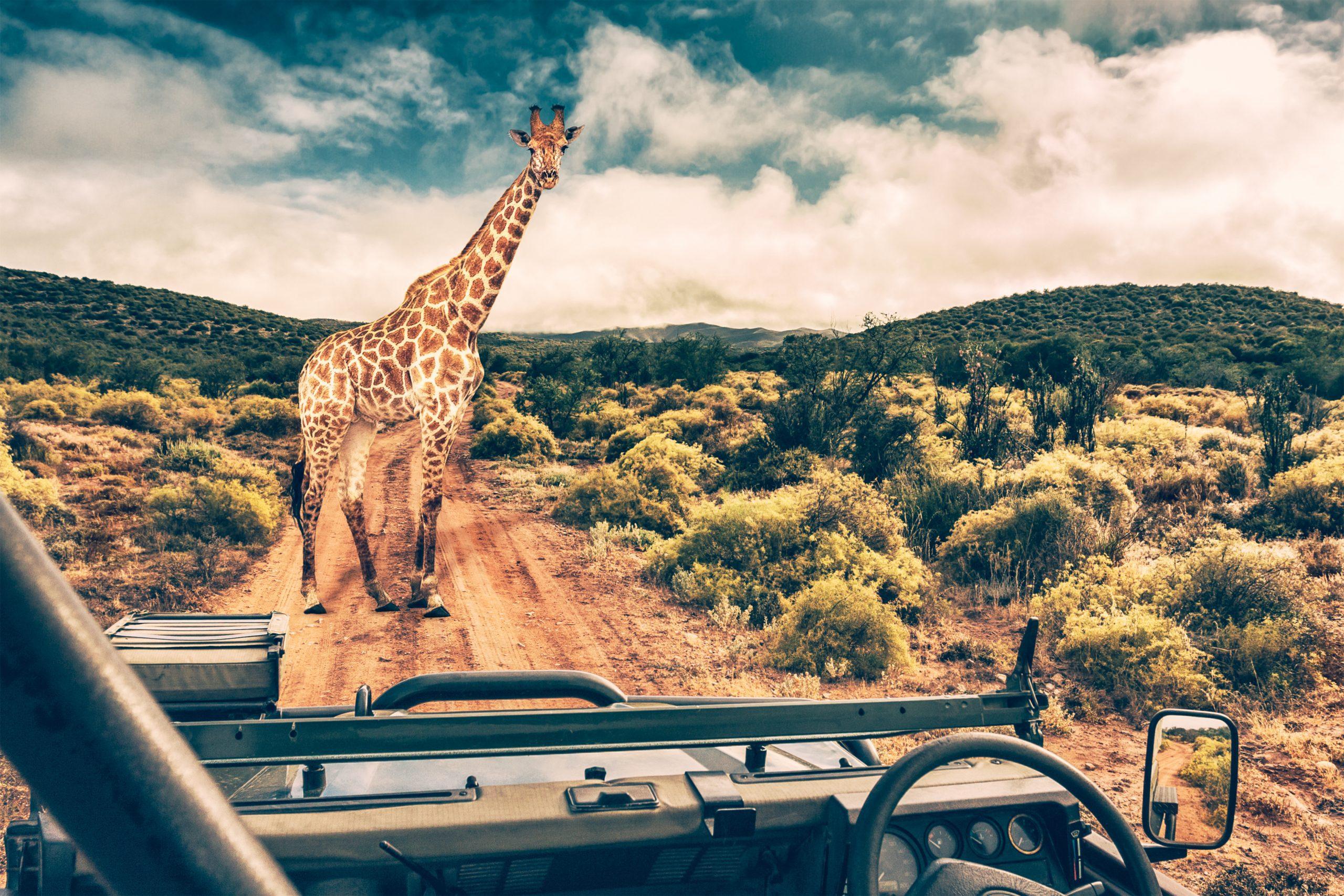 Self-Drive Safari | Kruger