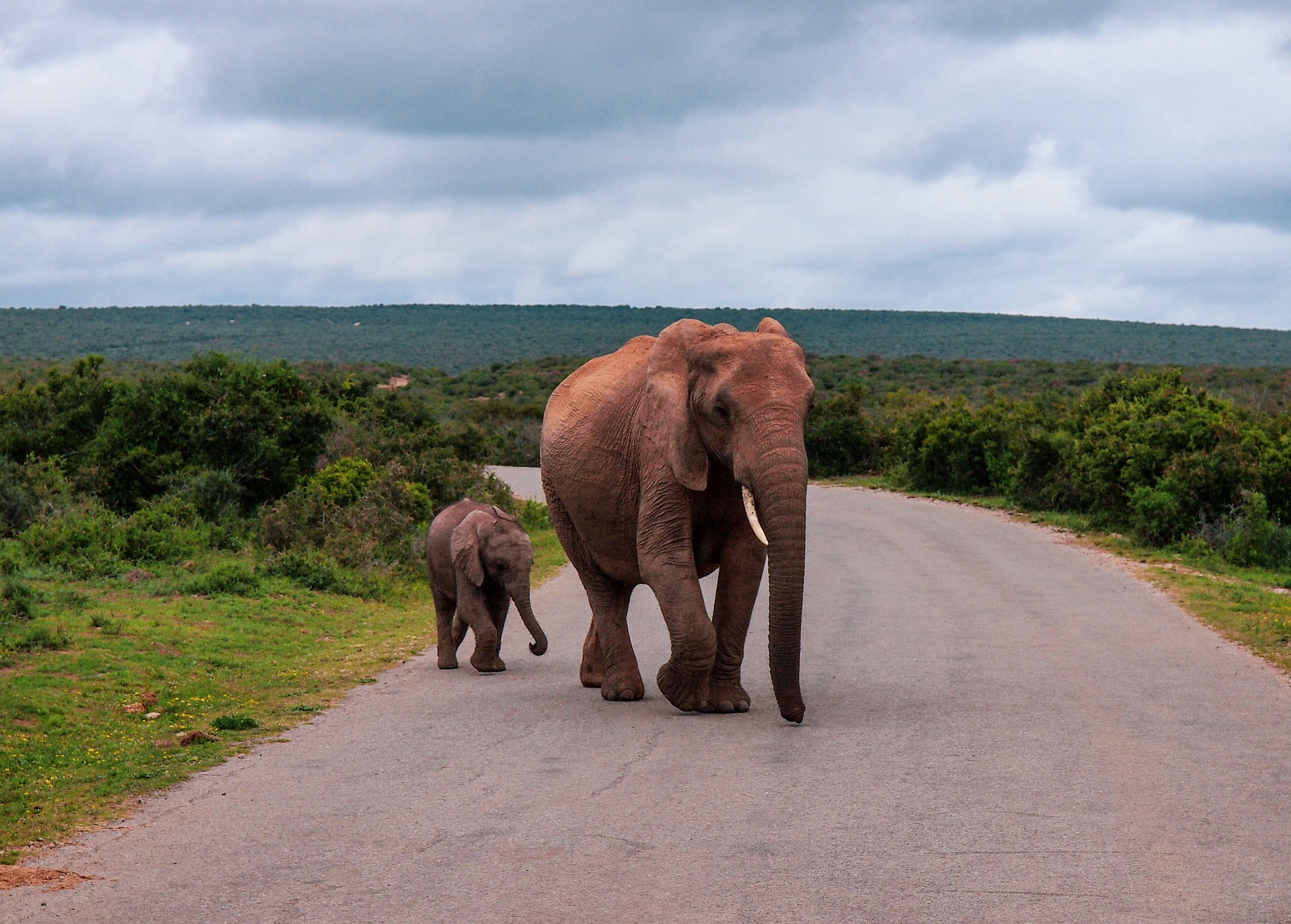 Self-Drive Safari | Addo