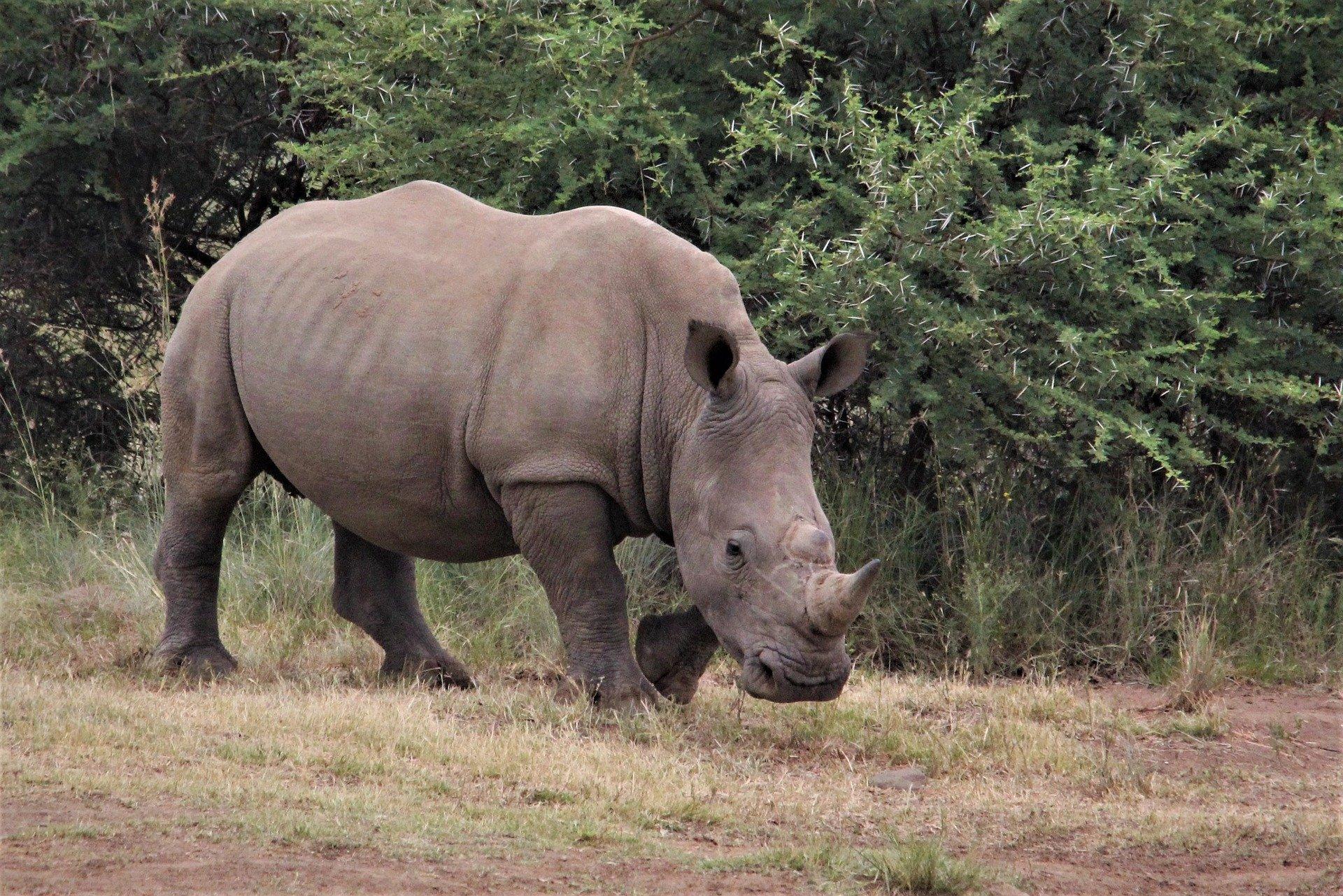 Self-Drive Safari | Pilanesberg