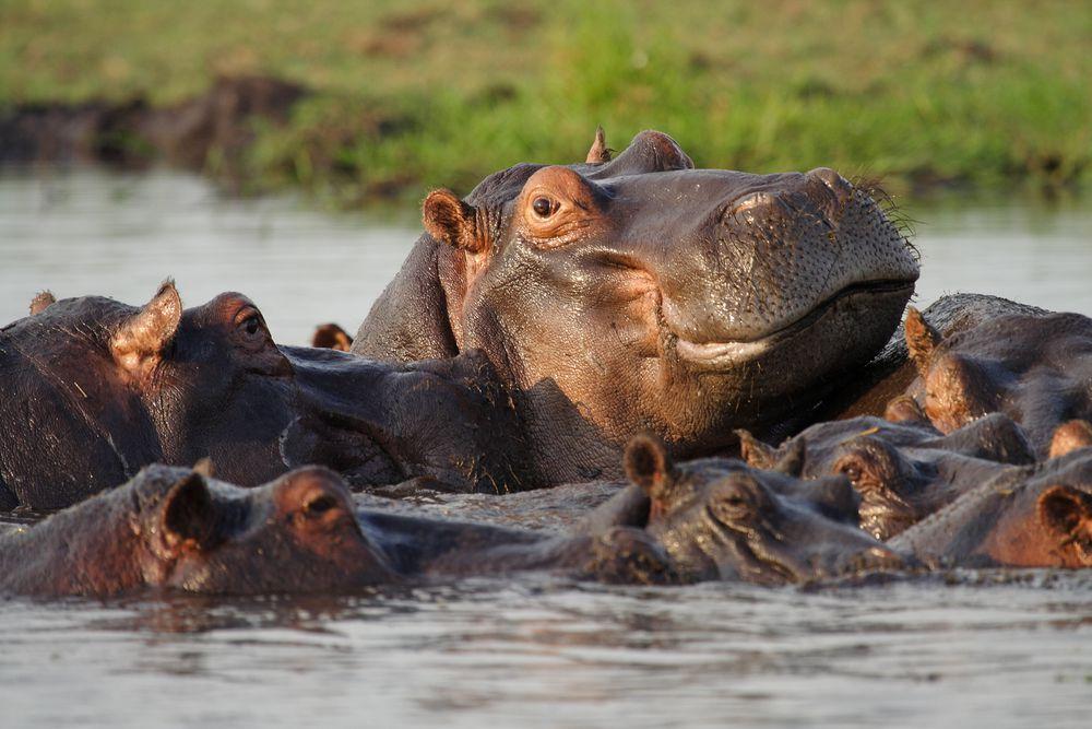 Self-Drive Safari | Chobe