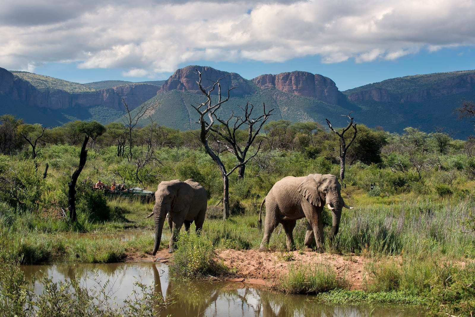 the top safari destinations in south africa