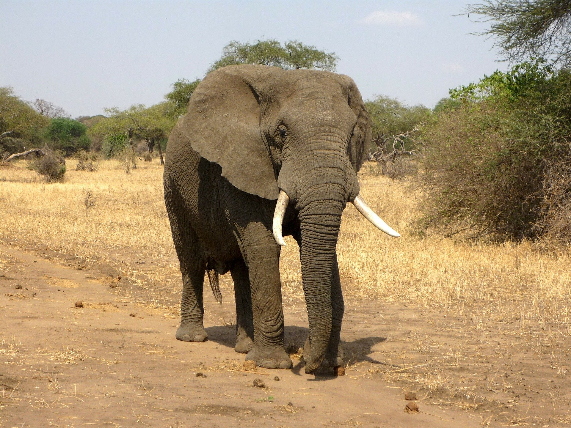Why Elephants Are Essential To The African Ecosystem