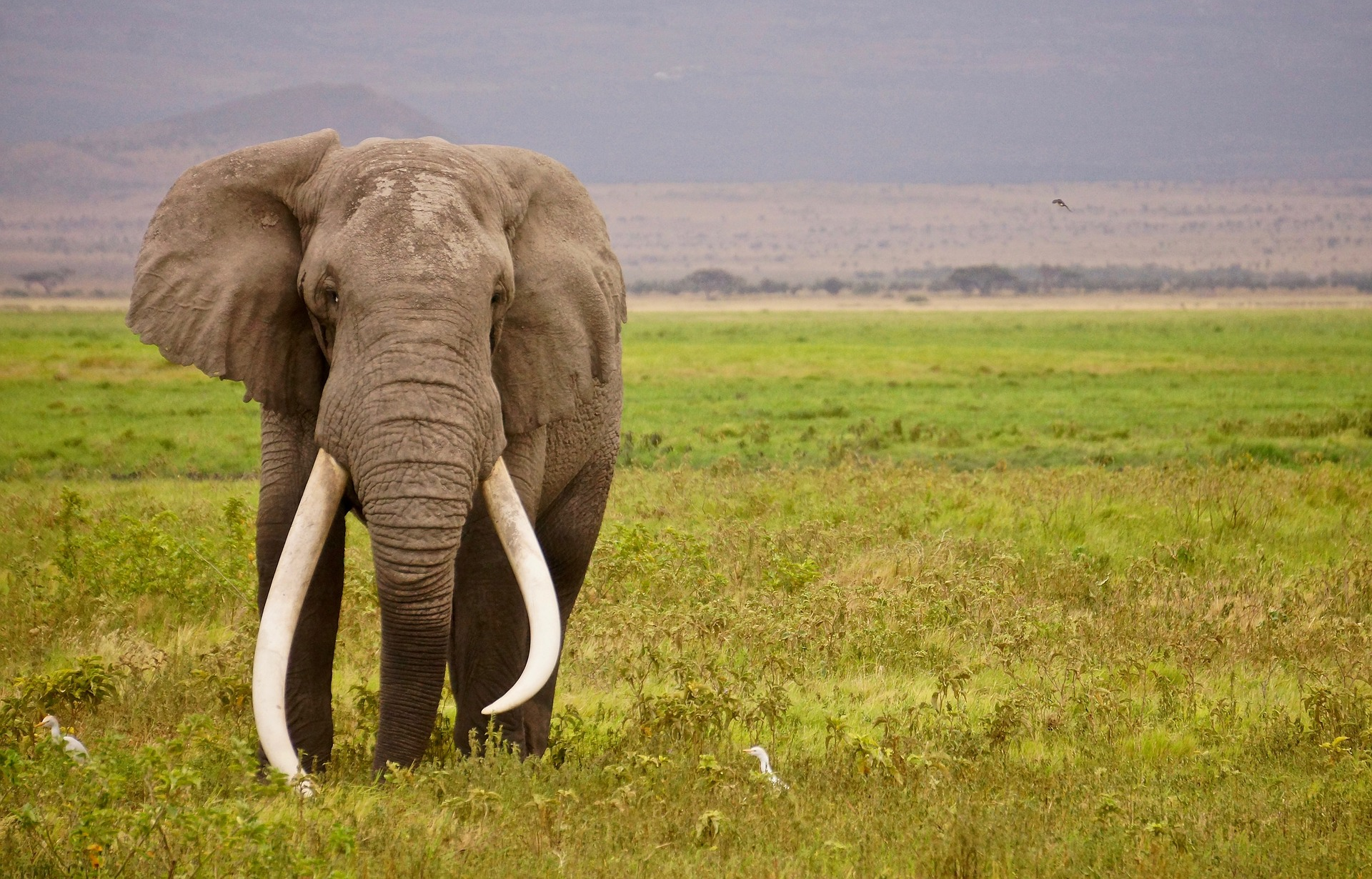 14 Spectacular National Parks In Africa