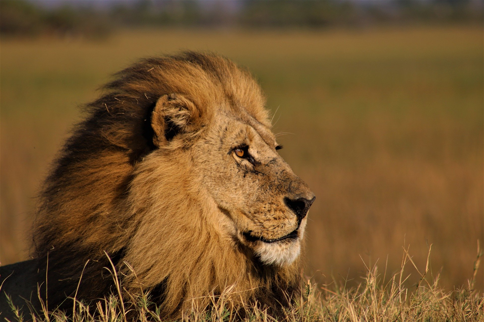 the 10 cat species of africa