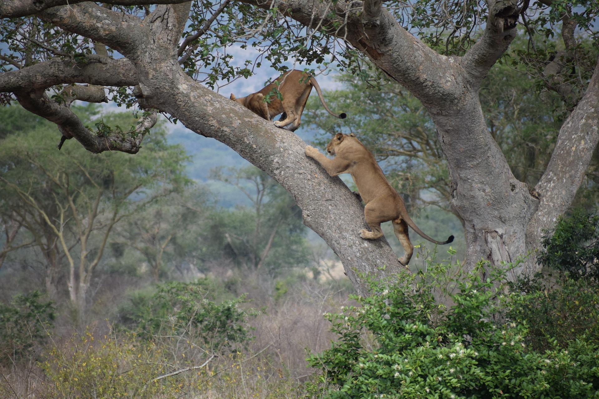 12 Beautiful National Parks In Tanzania